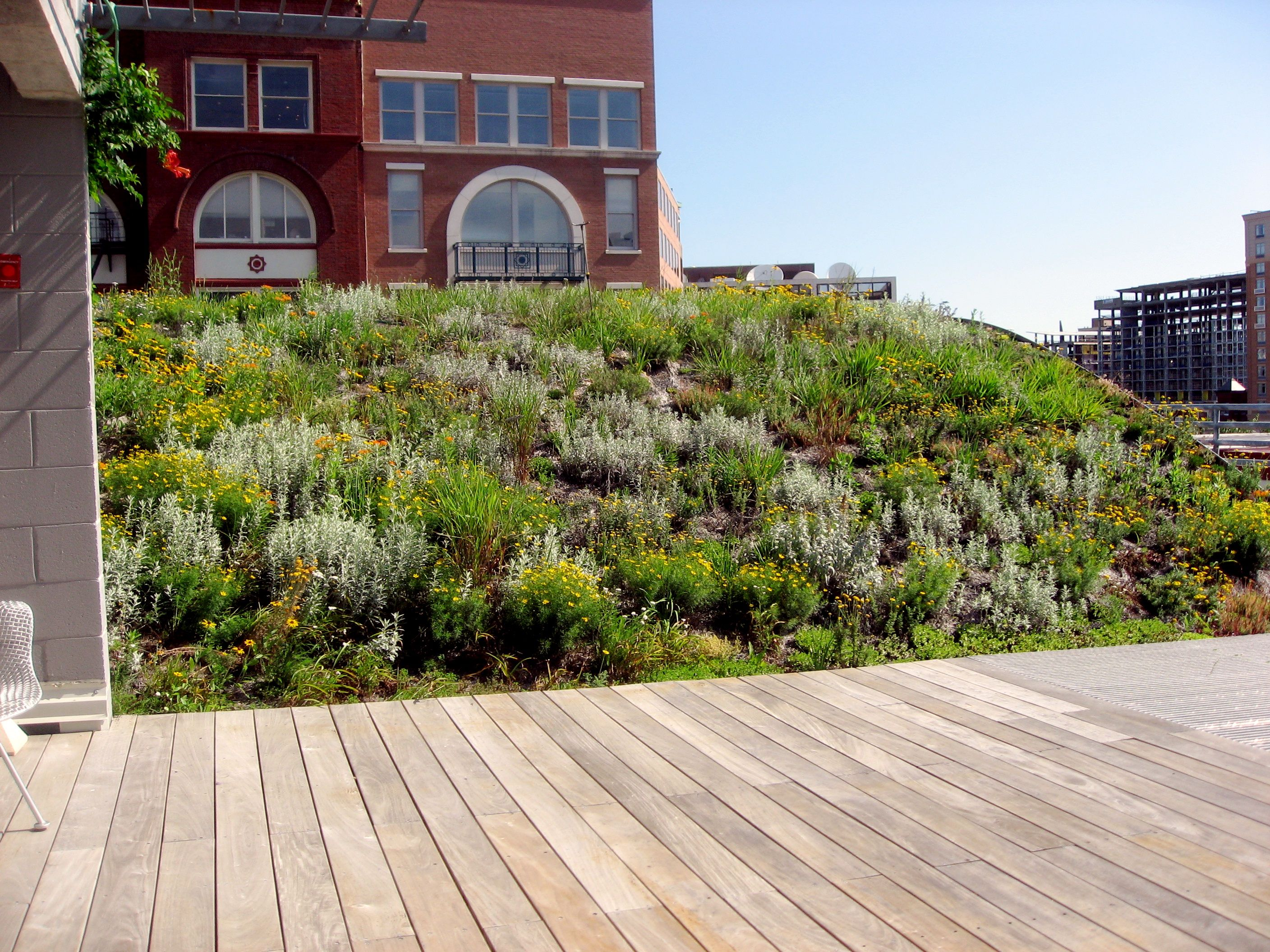 Best Fiddler On A Green Roof Green Roof Green Roof System 400 x 300