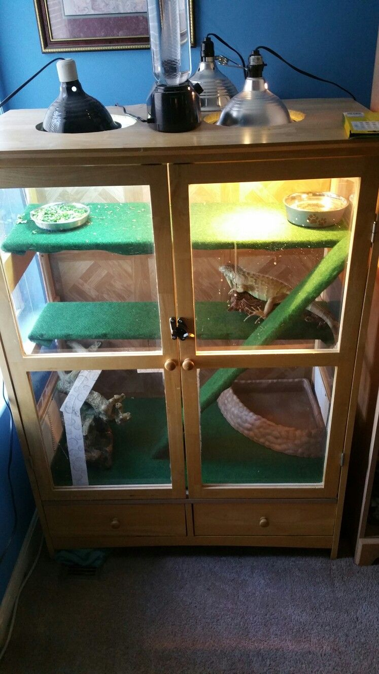 A small cabinet turned into iguana cage animals and other family