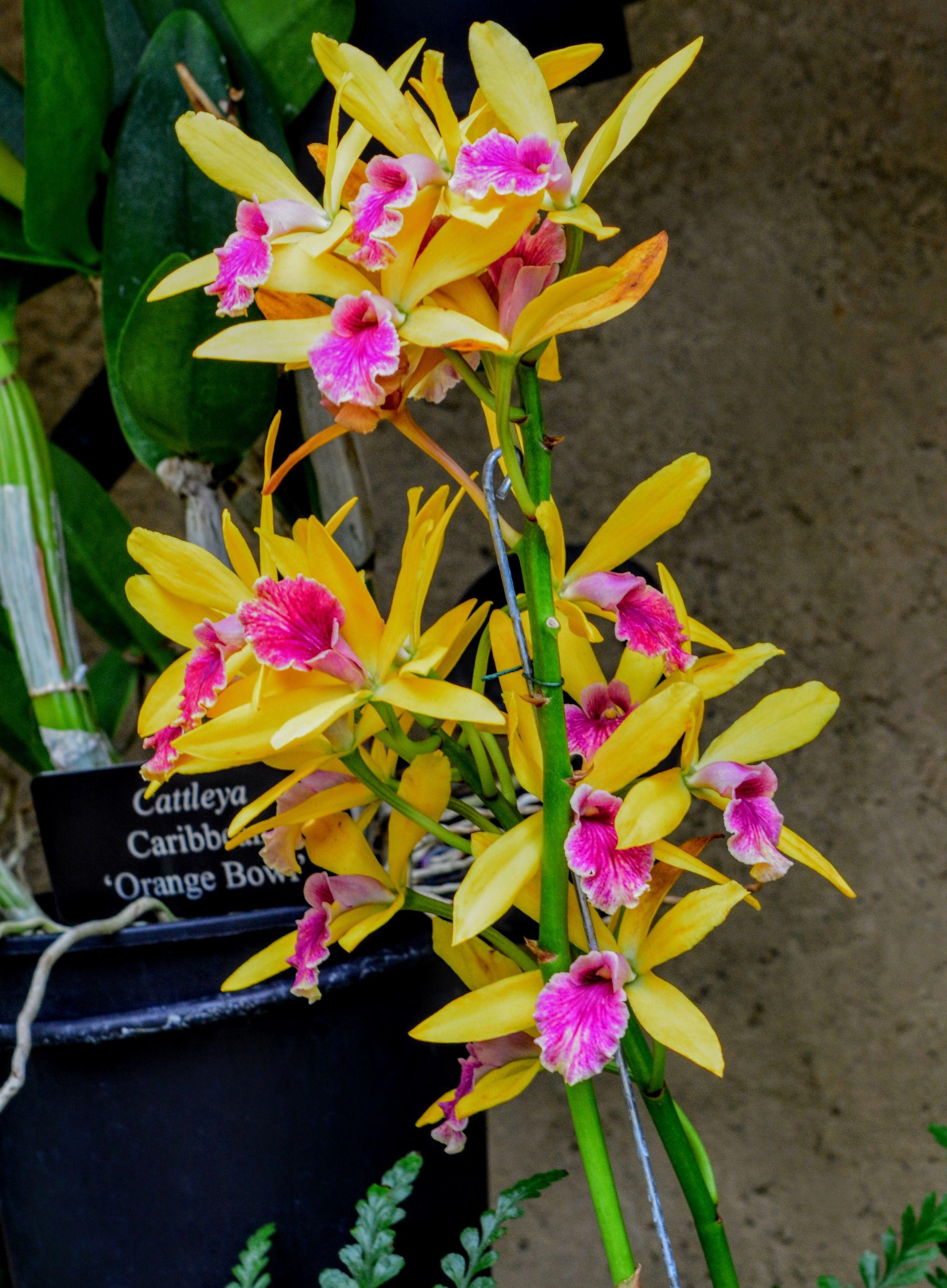 Pin by mónica espinosa on orquídeas pinterest