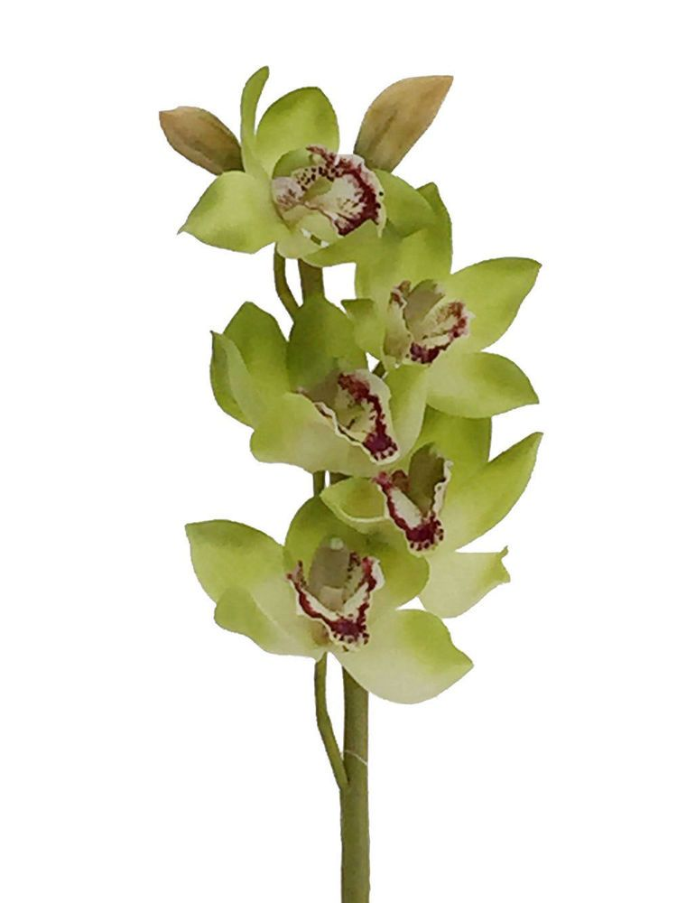 31 Artificial Silk Cymbidium Orchid Flowers The Price Is For 2 Stems Lot Tpt Cymbidium Orchids Orchid Flower Orchids