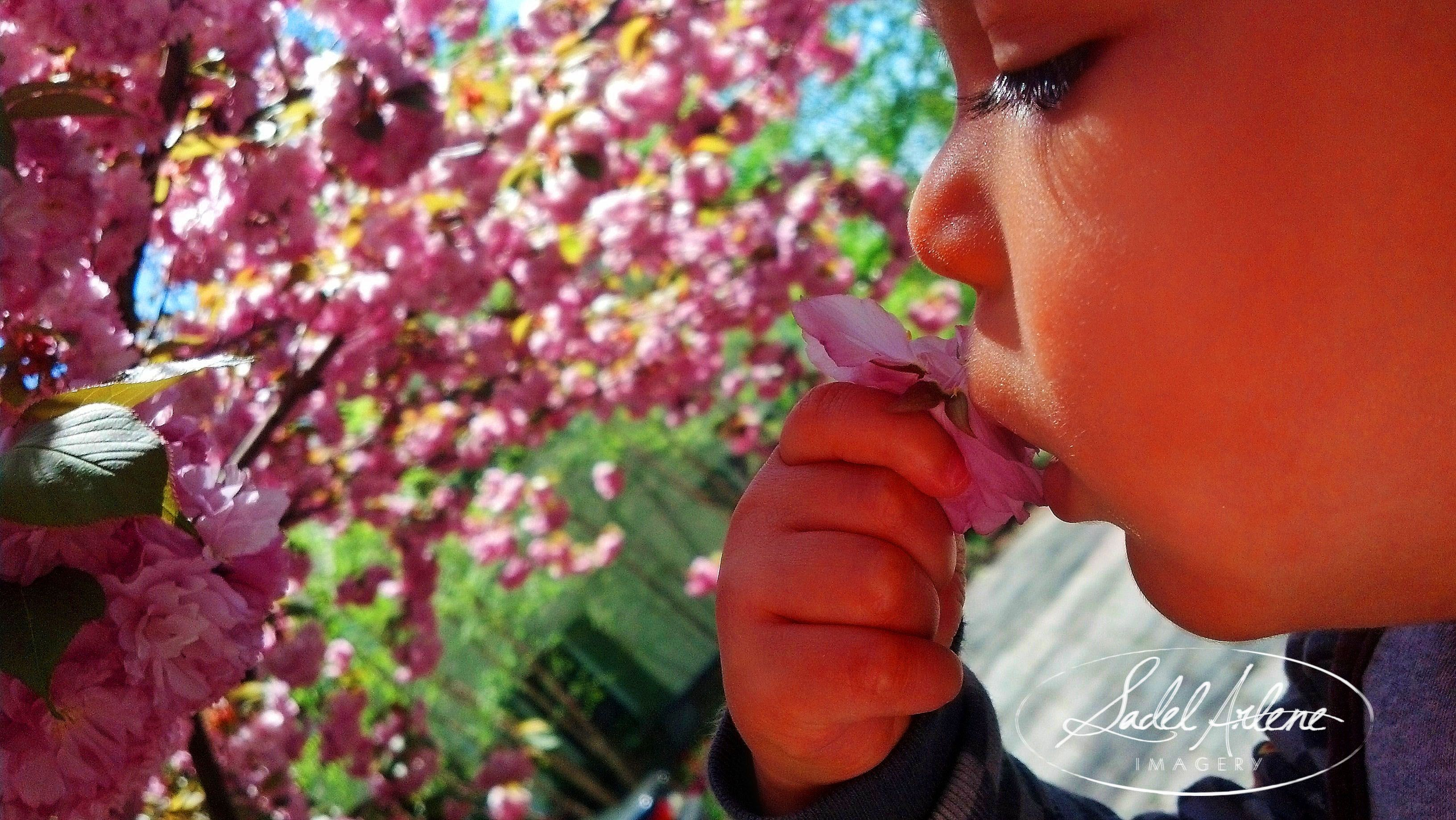 Sometimes you just have to stop and smell the roses. ...or flowers... :p