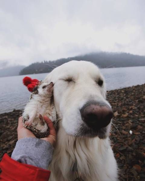 30 Furry Friends To Warm Your Heart