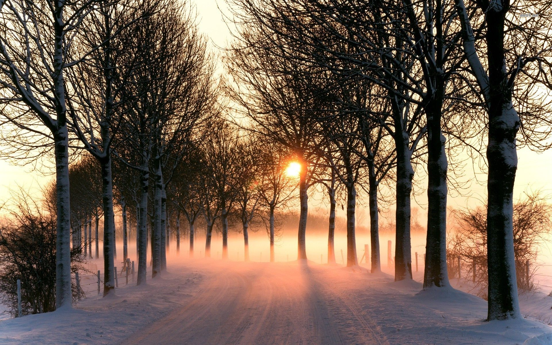 Winter Sun Hd Desktop Wallpaper High Definition Fullscreen