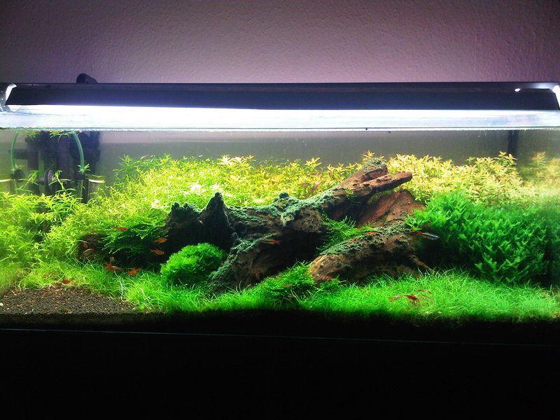 Diy Aquascape Lighting Ideas Aquarium Fish