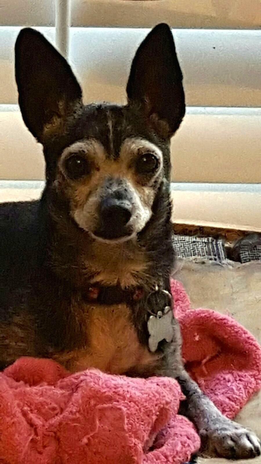 GayWeHo Dogs 4 U 🐶 on Dogs, Chihuahua, Pup