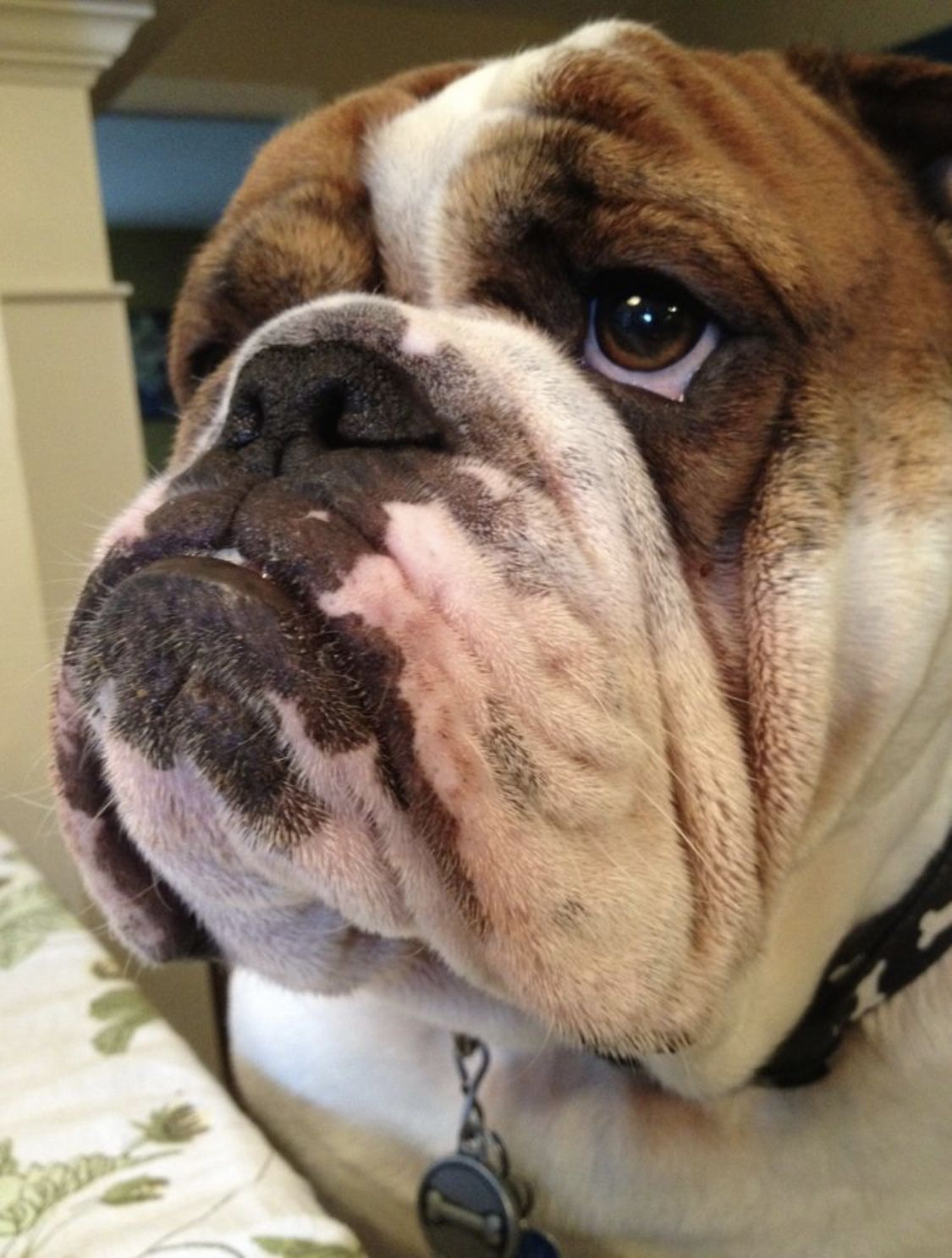 Pin By Lindsey Holmes On My Butter Bean Funny Bulldog Pictures
