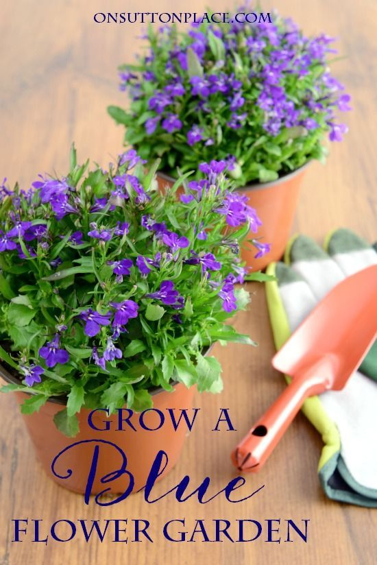 Blue \ White Flower Garden Ideas Jardines, Ideas para el jardín y