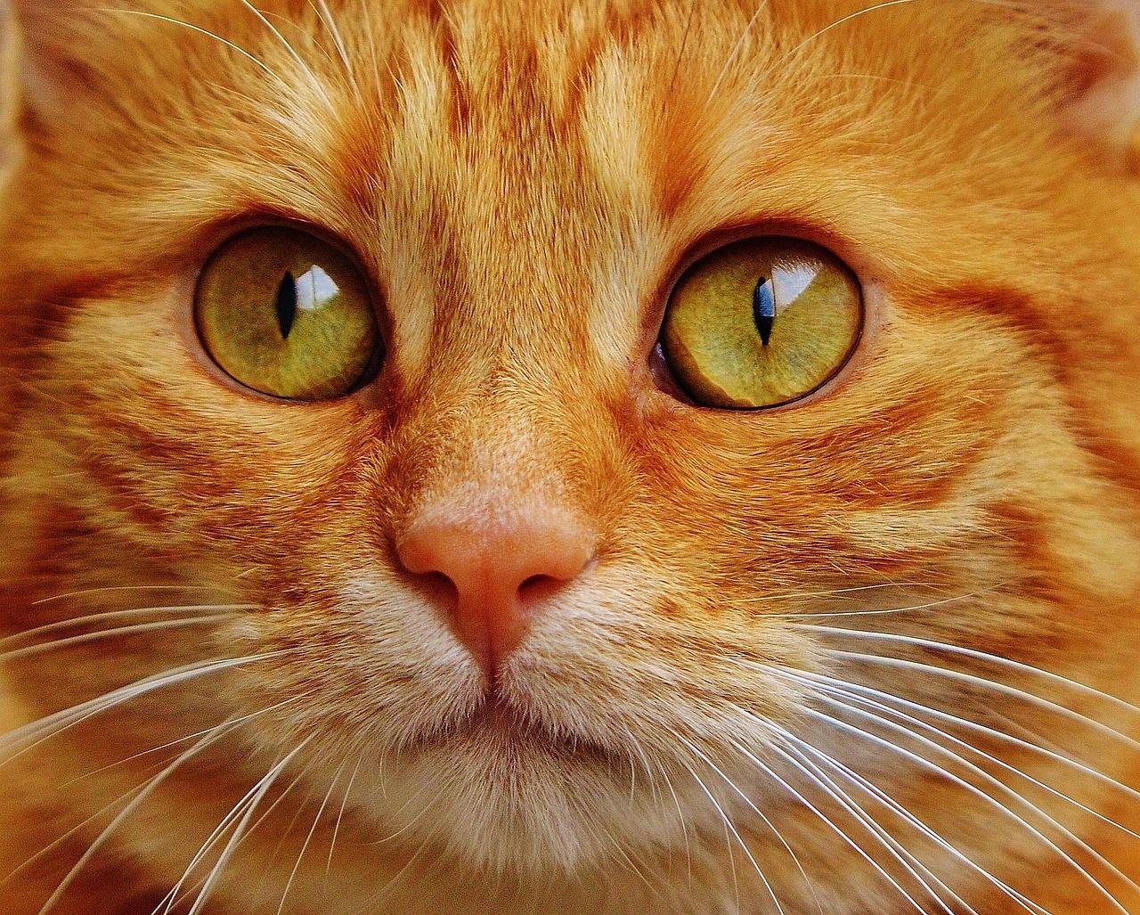 Kostenlose Katzen Videos