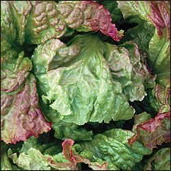 ROSSA DI TRENTO is a beautiful Italian heirloom cutting lettuce that can grow nearly year round in mild climates. Reddish-brown leaves are oval with wavy frilly margins. Resists bolting. Looseleaf type,