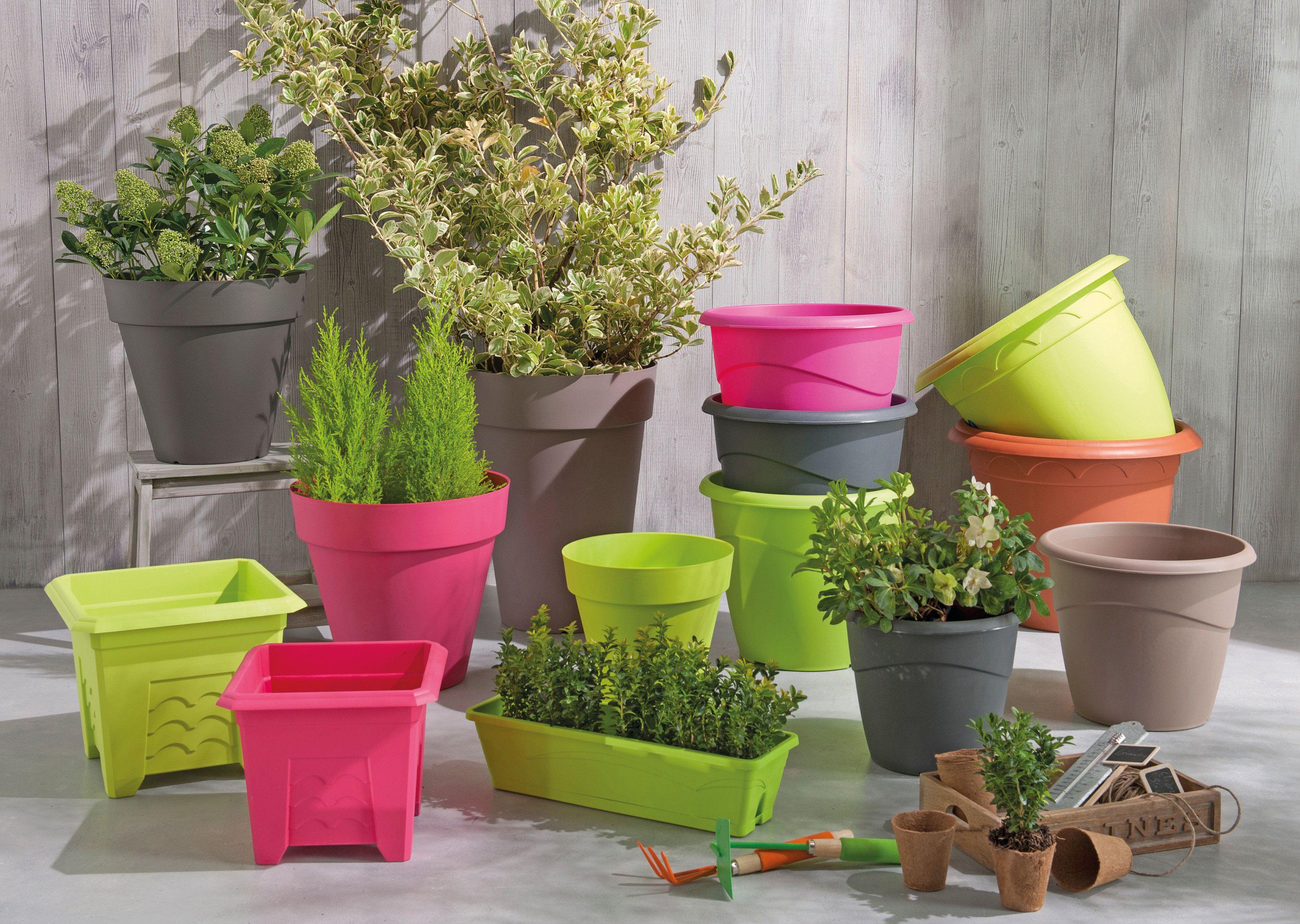 DIY Planter un œuf cru dans un pot de fleurs Oeuf cru