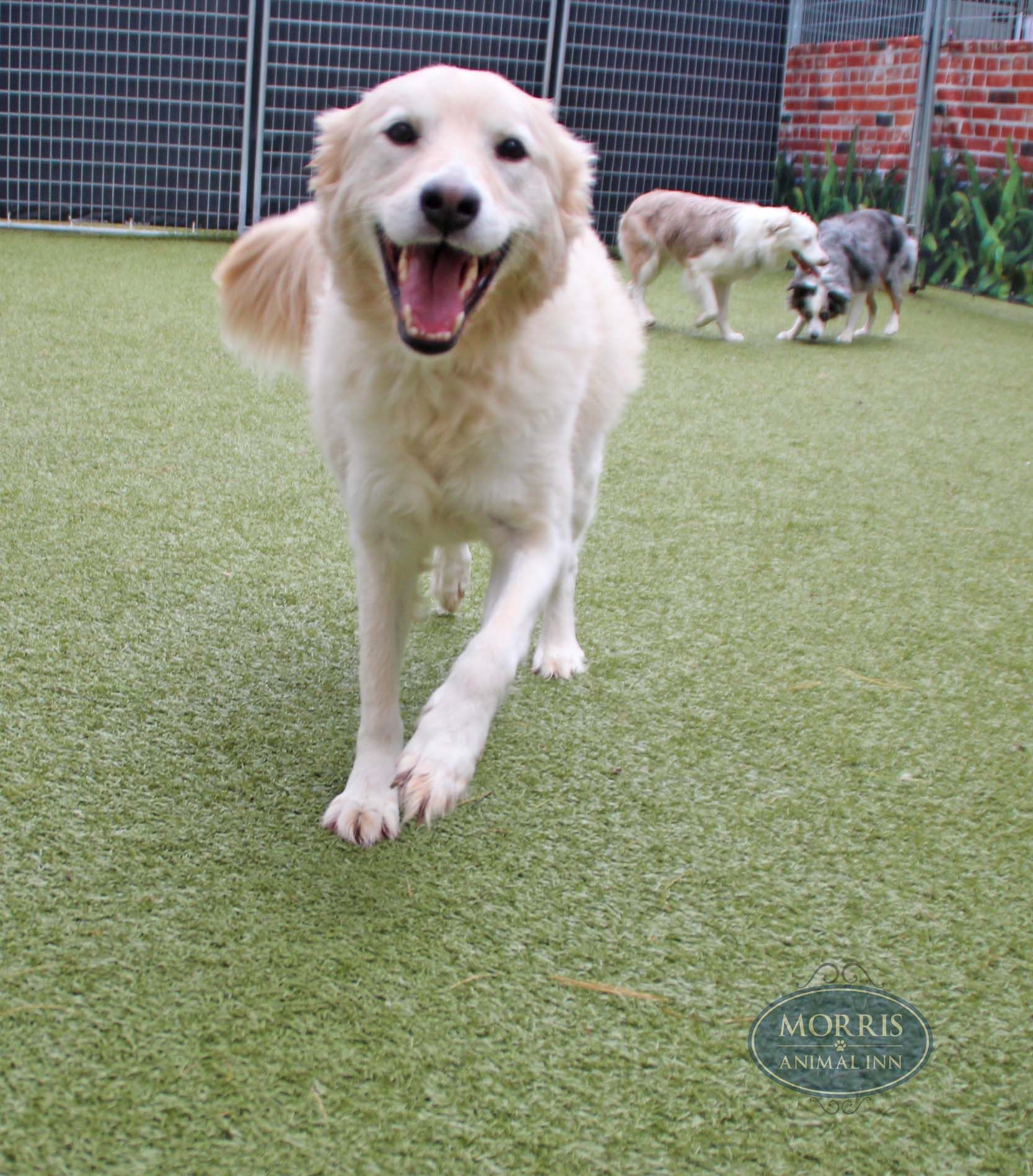 Fiveyearold Zoey is a happy girl during group play. Just