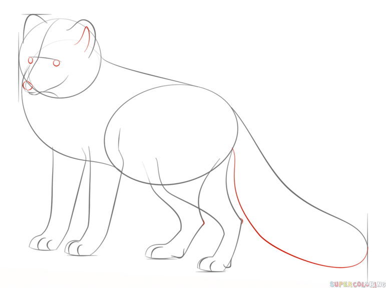 Line Drawing Step By Step : How to draw an arctic fox step by drawing tutorials