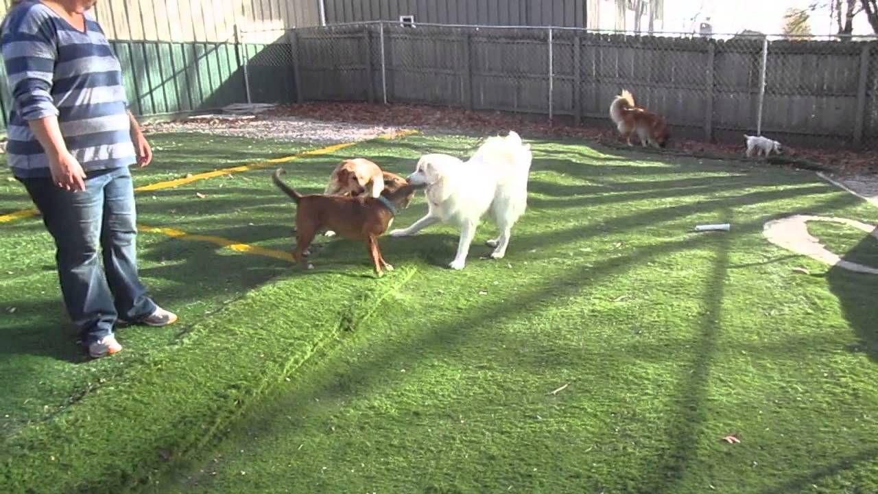 JD, Nani and Maggie Dog daycare, Animal hospital