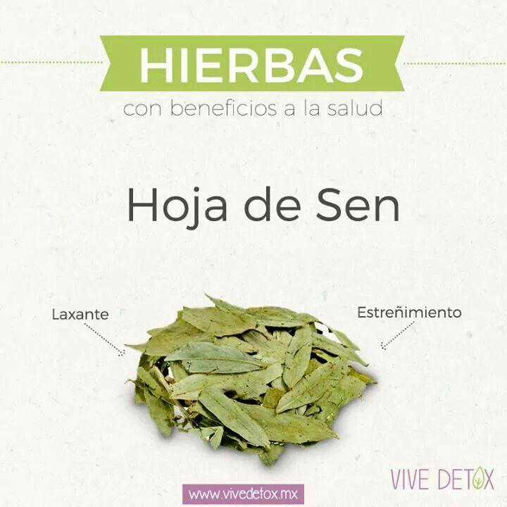 hojas de sen tea