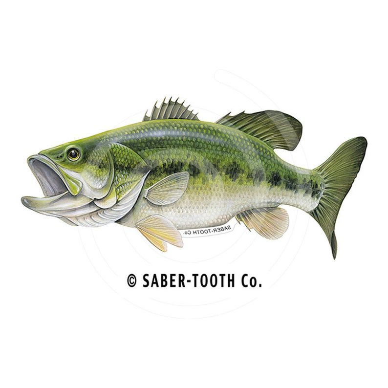 Decal Largemouth Bass Fish Sticker Etsy In 2020 Largemouth Bass Fish Fish Drawings