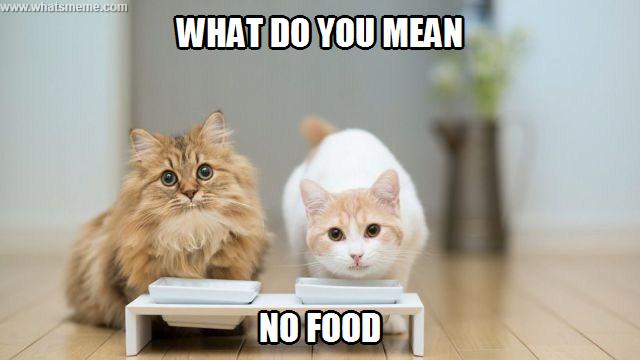 93b9f1b69f76247169ed2483db7fa913 bad cat what's meme ? cat city, cat, cat city bitch,Food Cat Meme