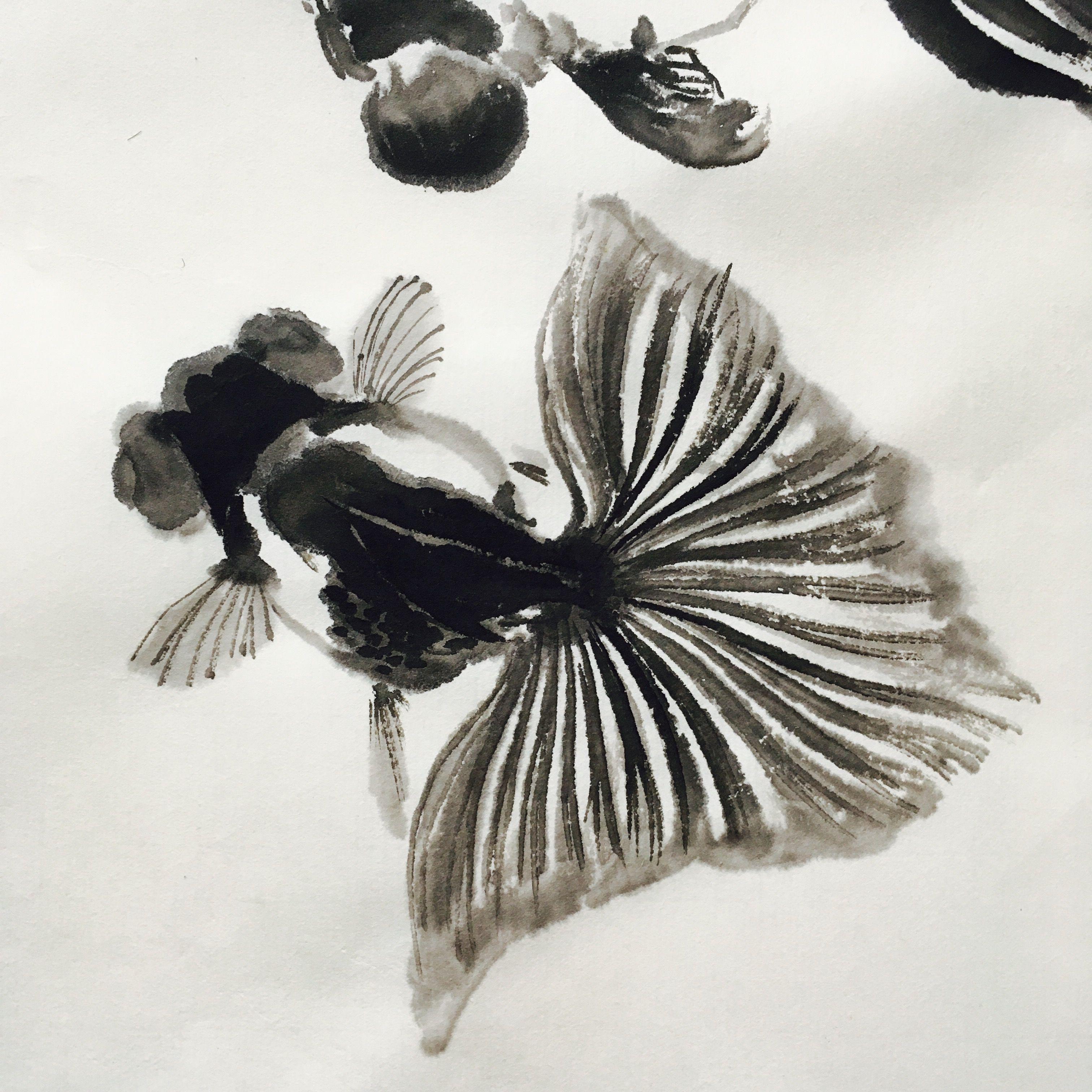 Pin de 森 en 金魚 | Pinterest