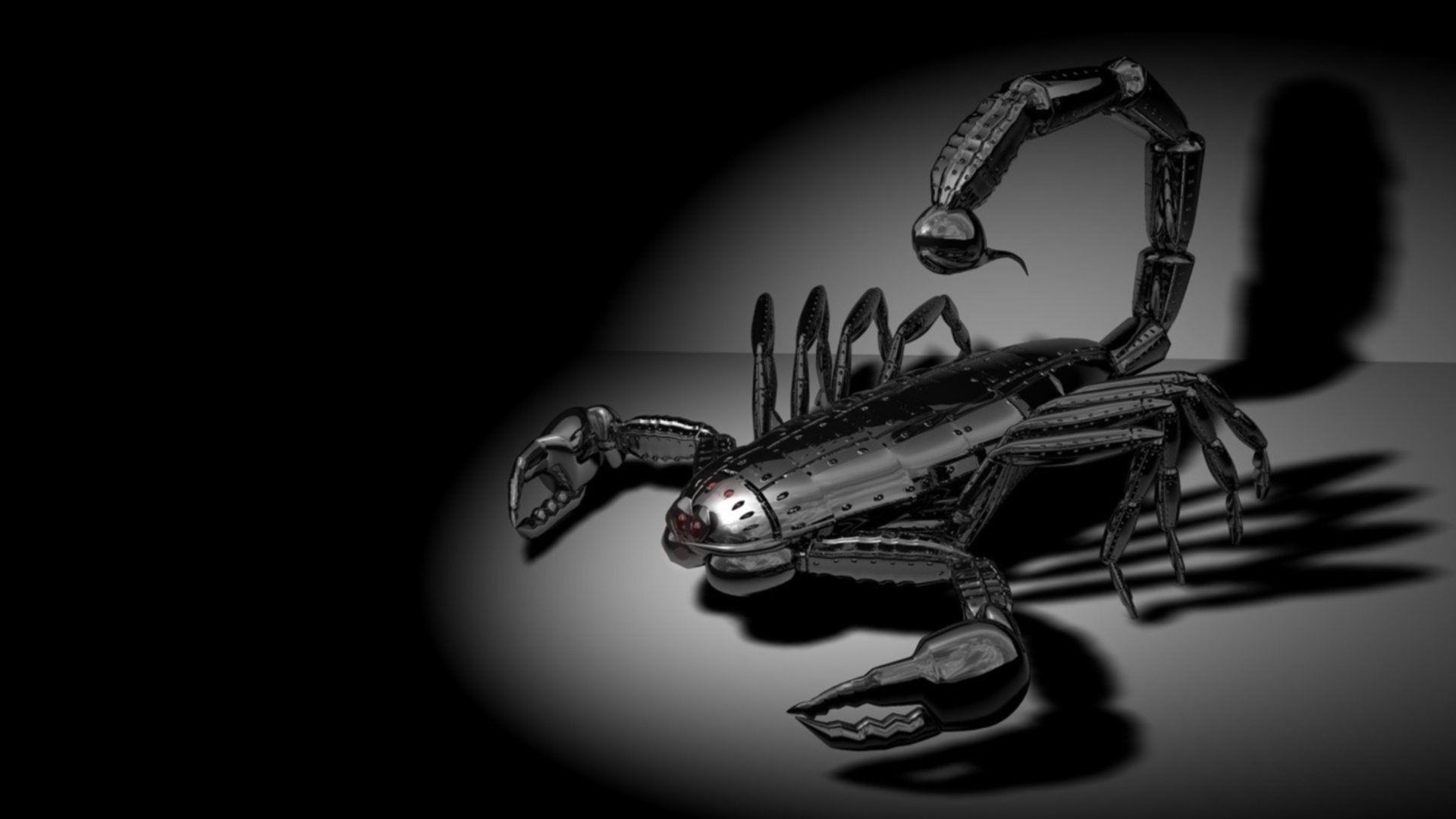 Black Scorpion HD Wallpaper From Gallsource