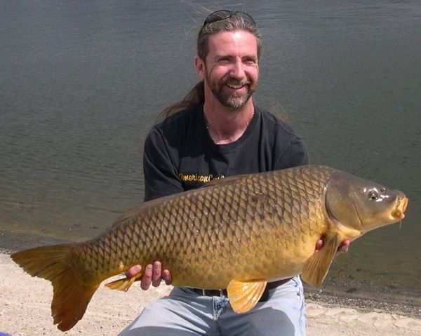 33 pounds of pure fighting, Southern Californian muscle right here! This Common Carp was a welcomed sight for sore eyes back in April 2009, it had been a very slow Spring's fishing that year...  #CyprinusCarpio #CommonCarp #BigCarp #CarpFishingInAmerica #HowToCatchCarp #AmericanCarpSociety #WayneBoon