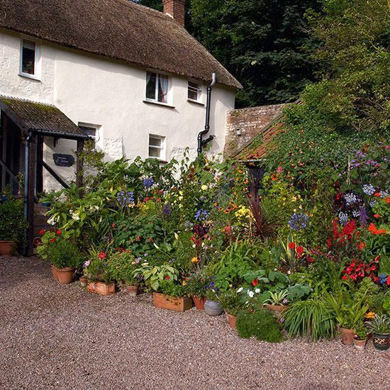 Front garden of white thatched cottage with largescale potted display Front garden of white thatched cottage with largescale potted display