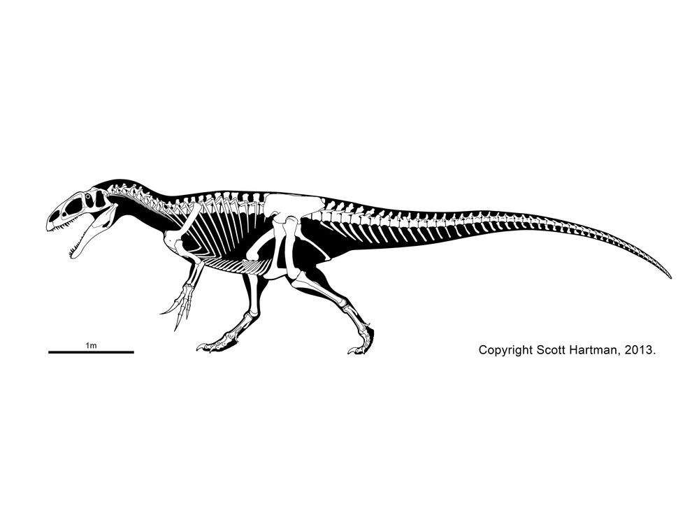 neovenator scott hartman dinosaur illustrations
