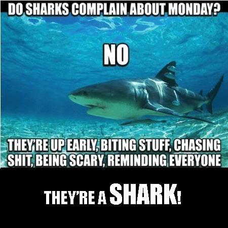 Pin By Kristin Jerome Skinny Girls On Motivation Shark Quotes Sharks Funny Shark