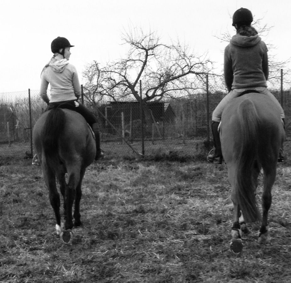Love this picture !<3 #horses