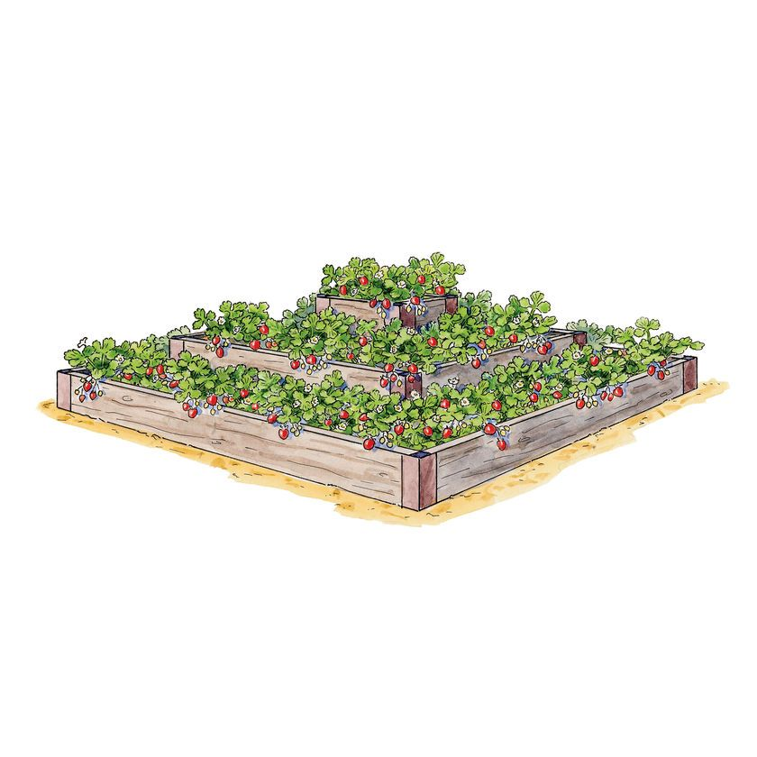 Strawberry Beds, 3-Tier Raised Strawberry Bed