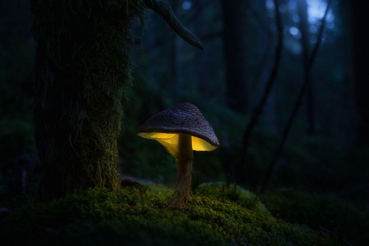Картинки магические грибы
