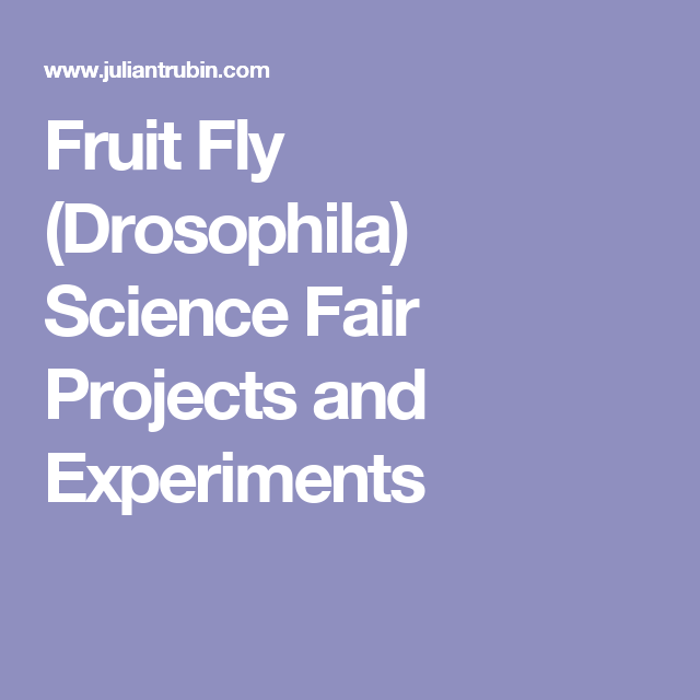 Stem School Harlow: Fruit Fly (Drosophila) Science Fair Projects And