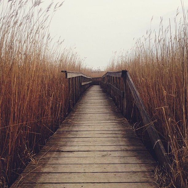 16 Perfectly Composed Leading Lines Photos Mashpics Line Photography Landscape Photography Landscape Photography Tips