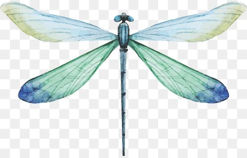Dragonfly Gainesville Png Mind Over Chatter Ii Practical Mindfulness And Meditation 500 319 Png Download Free Transpare Dragonfly Dragonfly Yoga Yoga Png