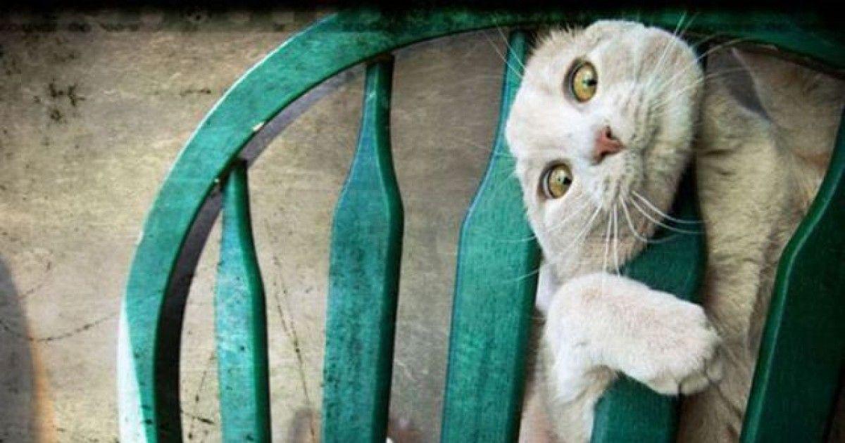 15 Animal Furniture Fails | Pixable