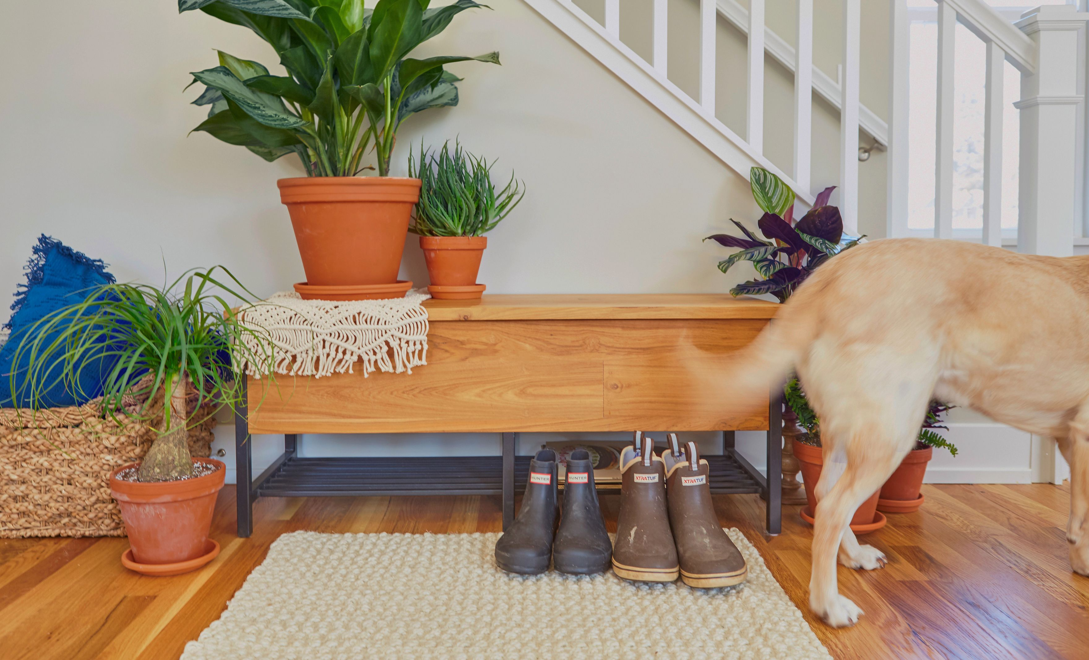 15 petfriendly plants safe for cats and dogs bloomscape