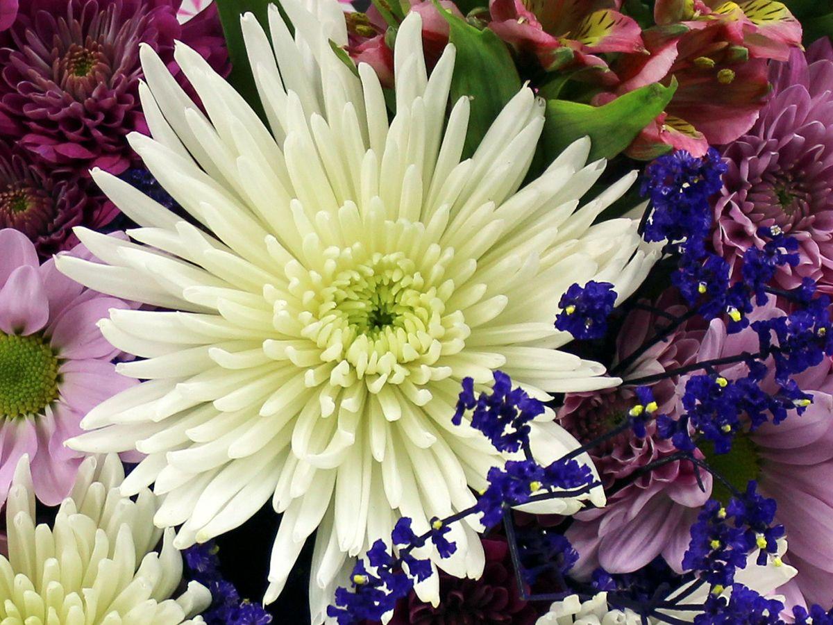 Lone Star Living Bouquet Texas Flowers Flower Meanings Flowers For You Flowers Bouquet