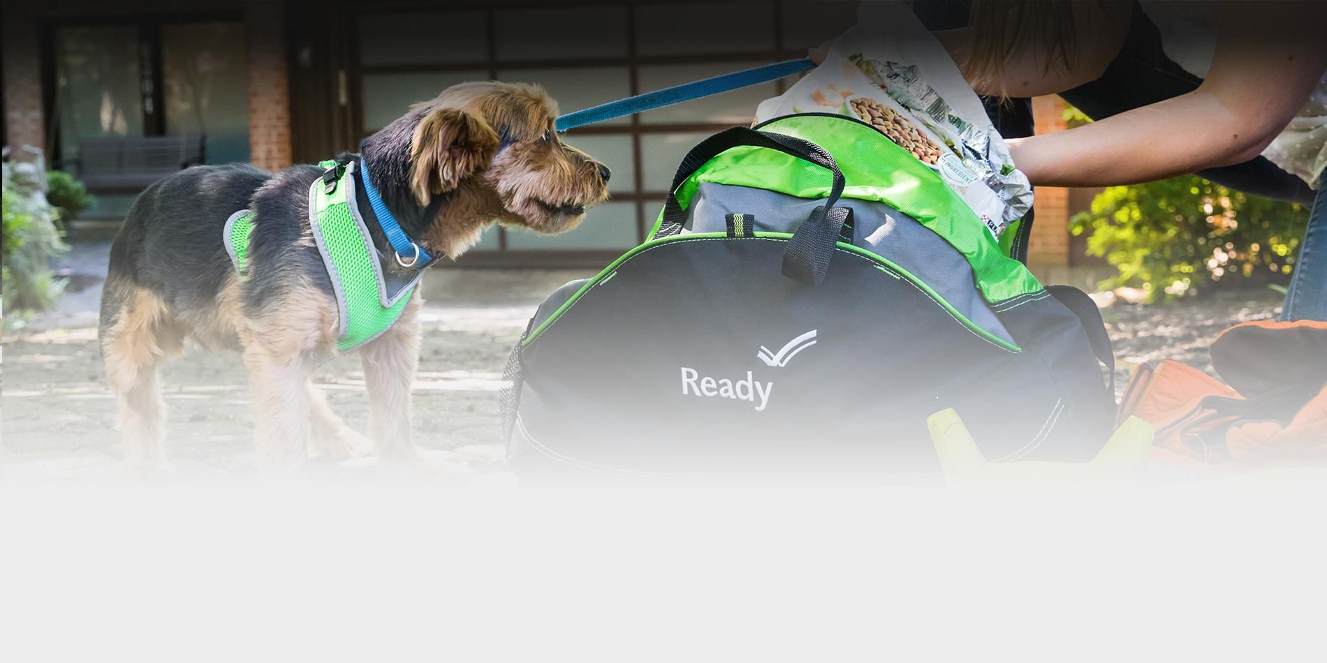 A picture of a dog next to an emergency supply kit with