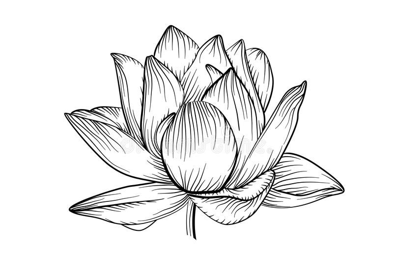 Image Result Water Lily Tattoos Black Tattoos Lilies Drawing