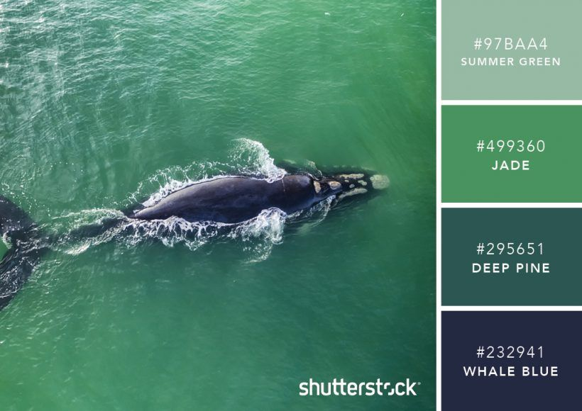 101 Color Combinations To Inspire Your Next Design Sea Green Palette