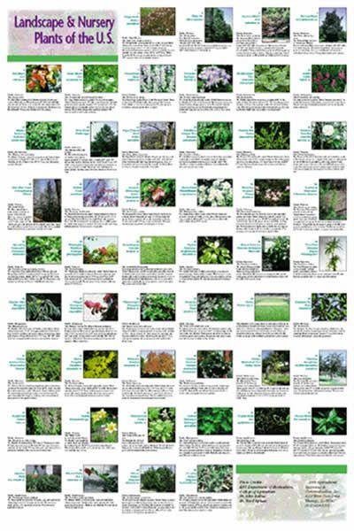 Landscape Plants House Projects Landscaping Plants