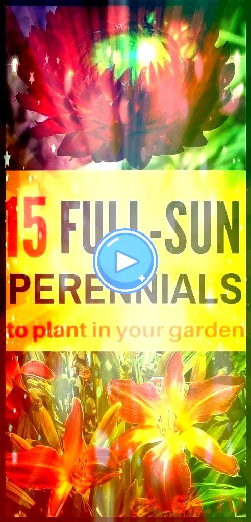 Perennials for Your Garden You don 39 t have to worry about not having any shade to offer your plants these perennials do best in full sun 15 FullSun Perennials for Your...