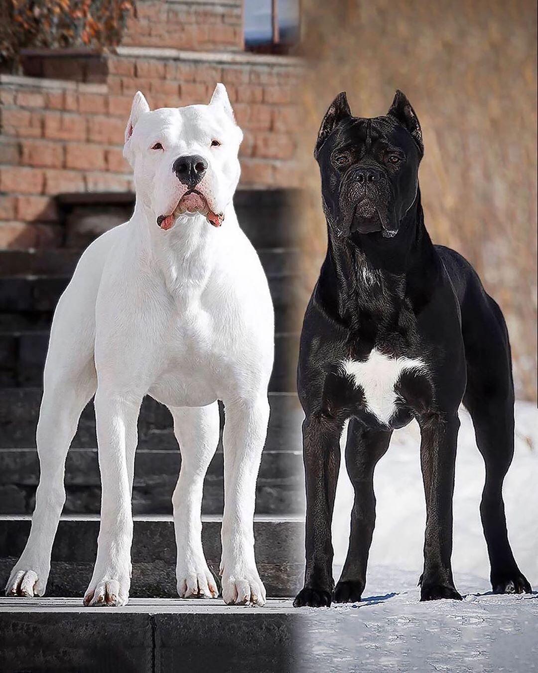 Pin On Dogos