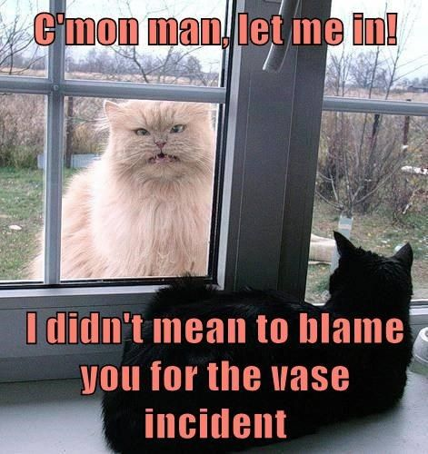 Inside Cat Is Angry At Outside Cat Inside Cat Fluffy Cat Funny Animals