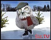 Image result for owls ice skating,  #Ice #Image #Owls #result #Skating #Winterbildertiere