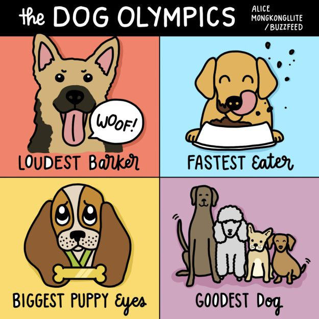 Image result for funny dog olympics cartoons