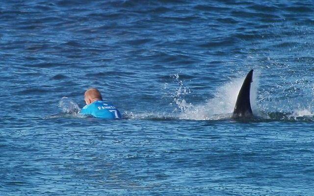 Shock in diretta tv attacco di uno squalo ad un serfista FOTO E VIDEO Attimi di autentico terrore a Jeffreys Bay, in Sudafrica, durante le gare della 7/a tappa della World Surf League, competizione a cui prendono parte solo i migliori atleti del mondo. Il 3 volte campi