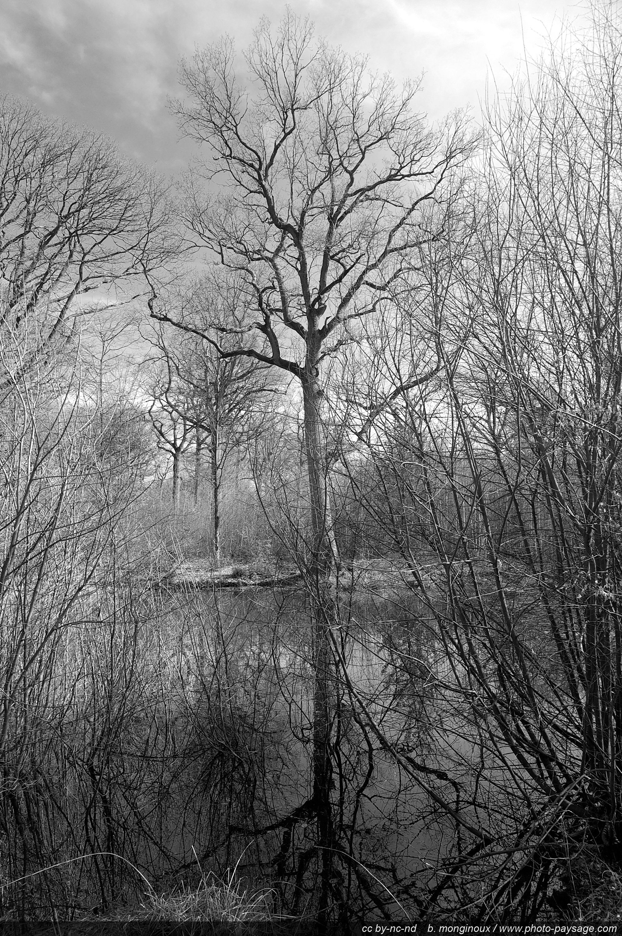 A Tree Reflecting In A Pond Ferriere Forest Seine Et Marne France Landscape Drawings Tree Drawing Realistic Drawings