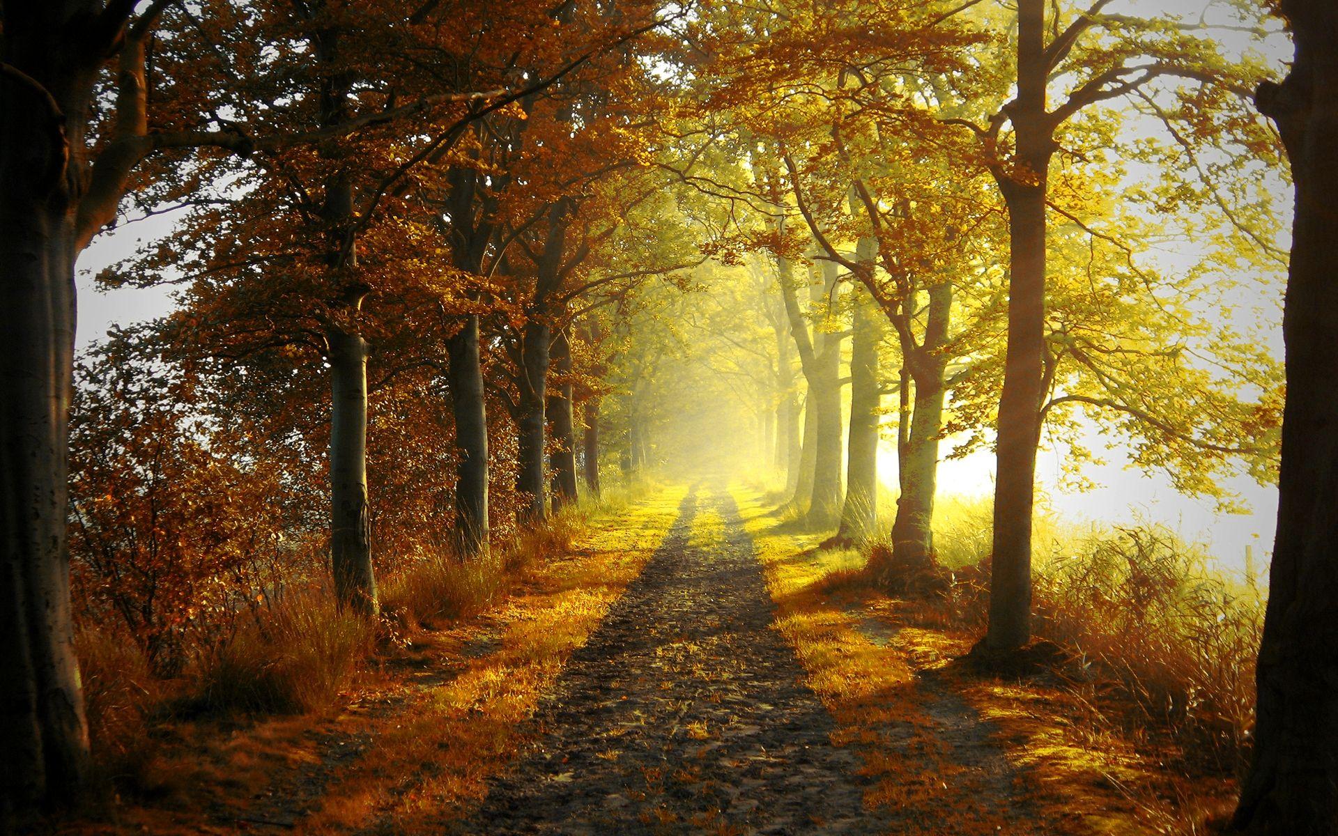 Autumn Forest Light 67551 9635 (1920 1200)