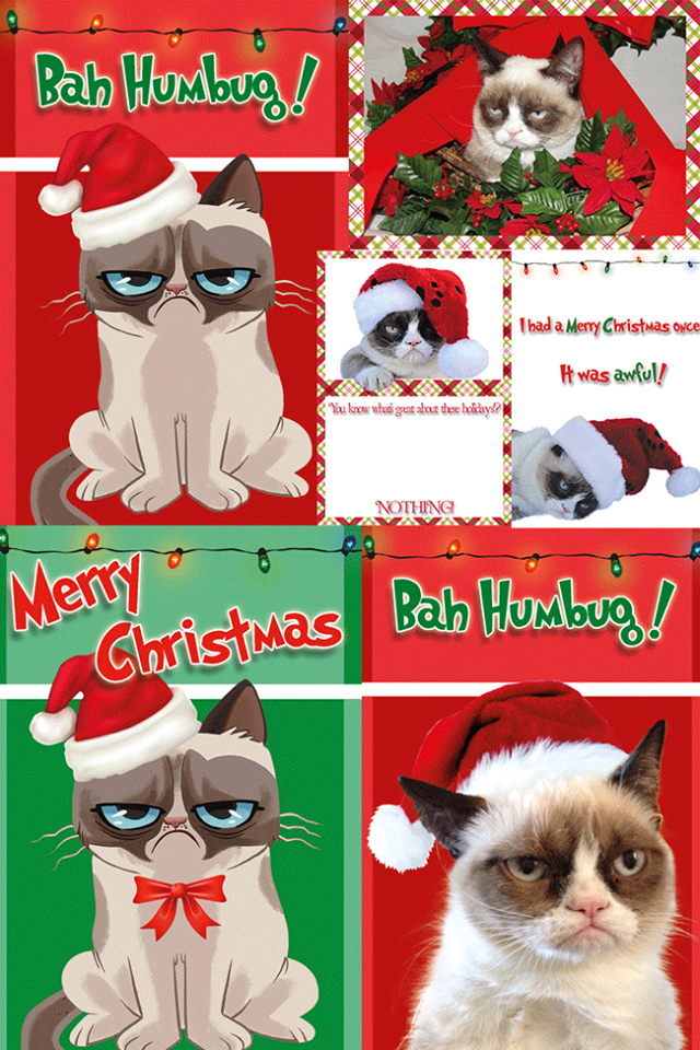 Pin by Rachael Kerr, Independent Jamberry Consultant on Grumpy cat ...