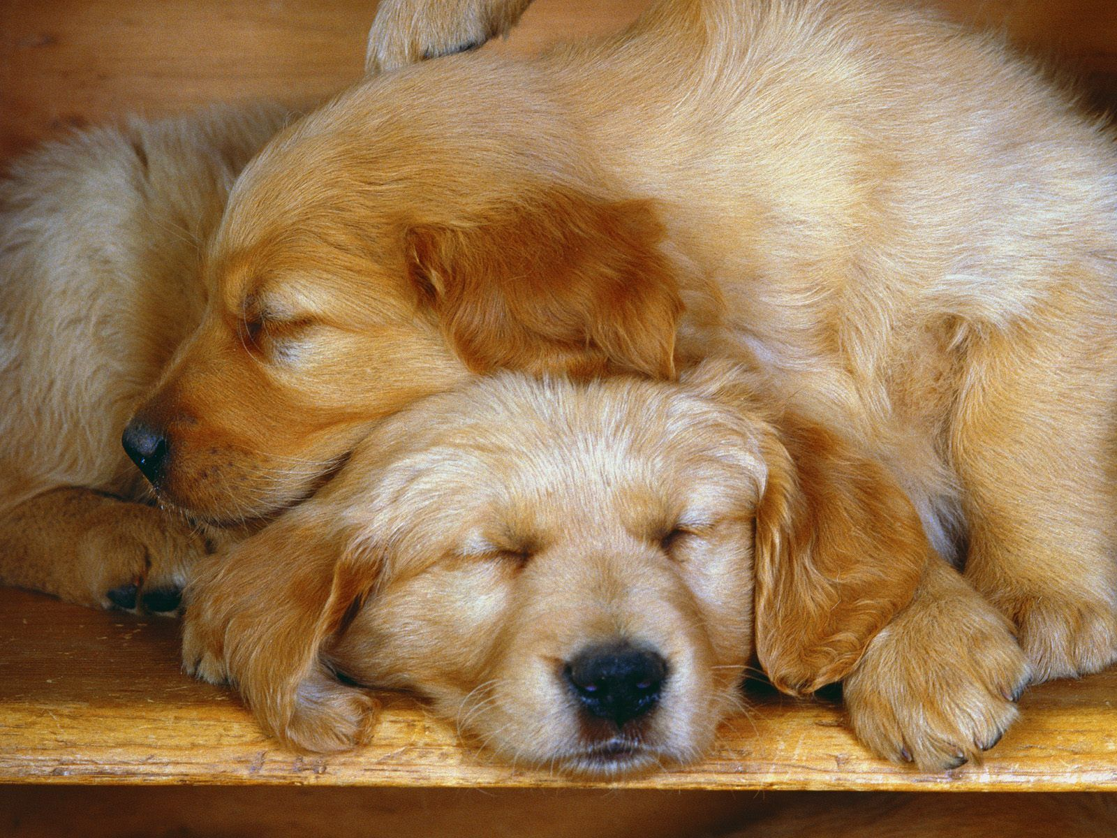 Cute dogs images cute dogs cool pic cute dogs cool images cute dogs