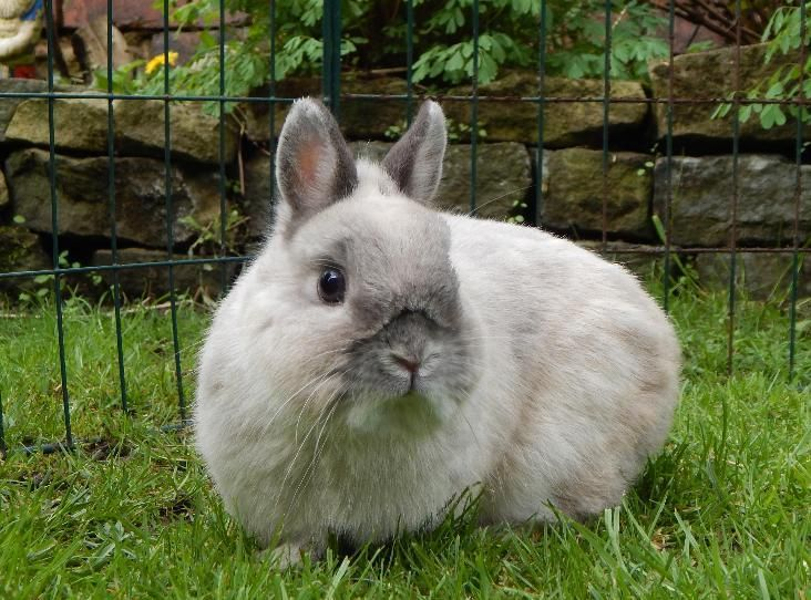 Pin by Rescue Pets on Bunnies Nethie & Polish in Rescue